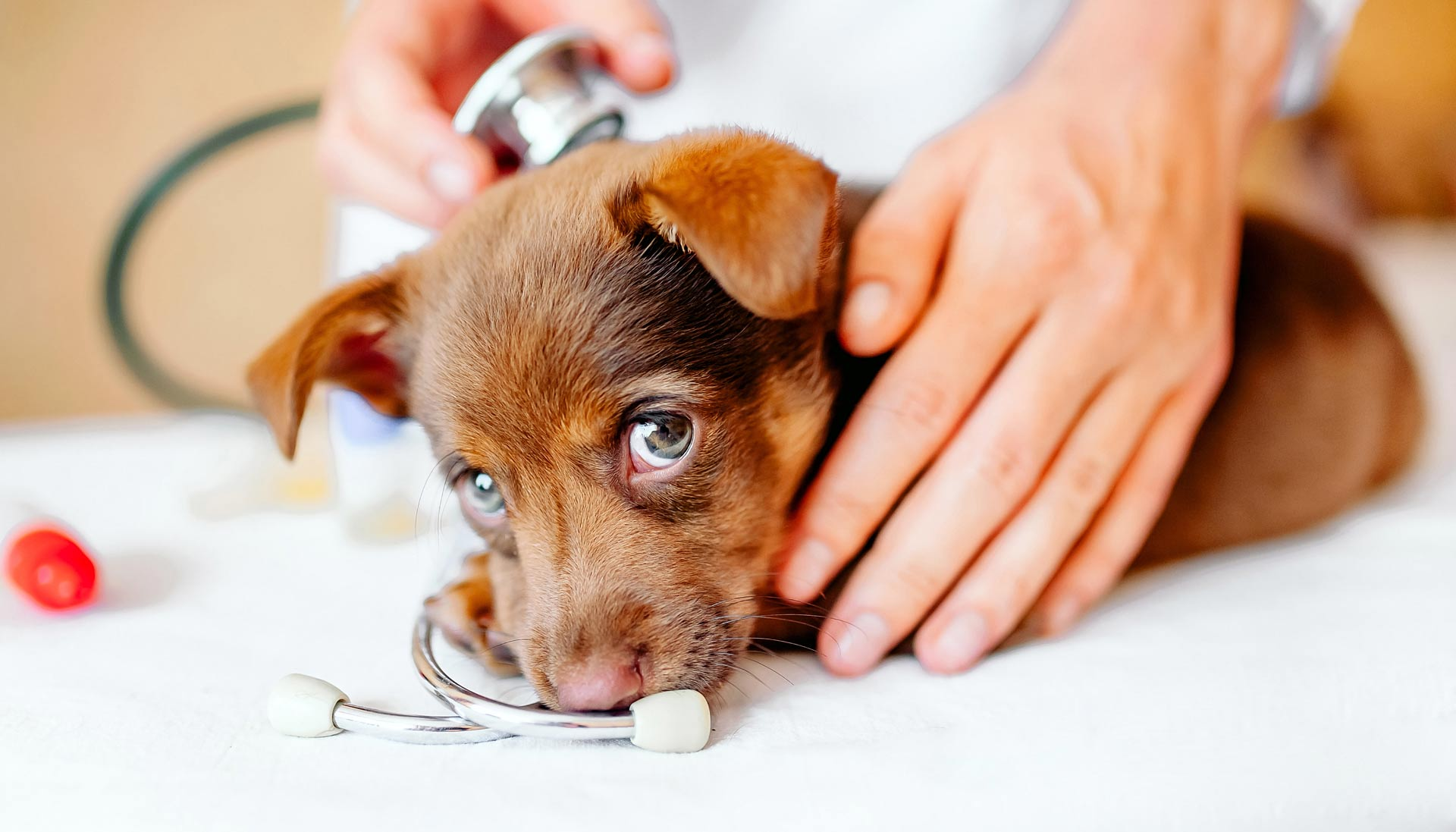VETERINARY CARE with integrity and heart.